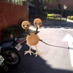 【Pokemon GO】一起上街抓寶可夢吧!